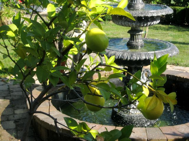 Lemon&fountain