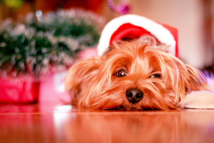 Finding the Right Pet-Sitter for the Holidays